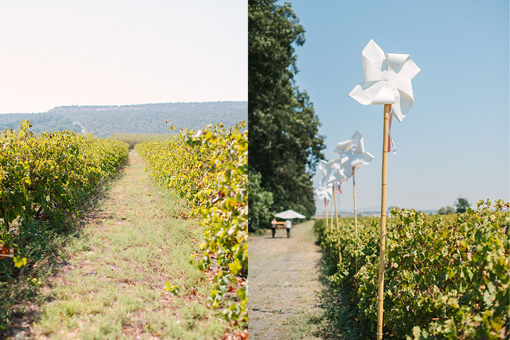 חתונה בלב מטע פקאנים ומסביבו שורות של כרמים יפהפיים. מתוך החתונה של דן וערבה. צילום: דניאל ישר