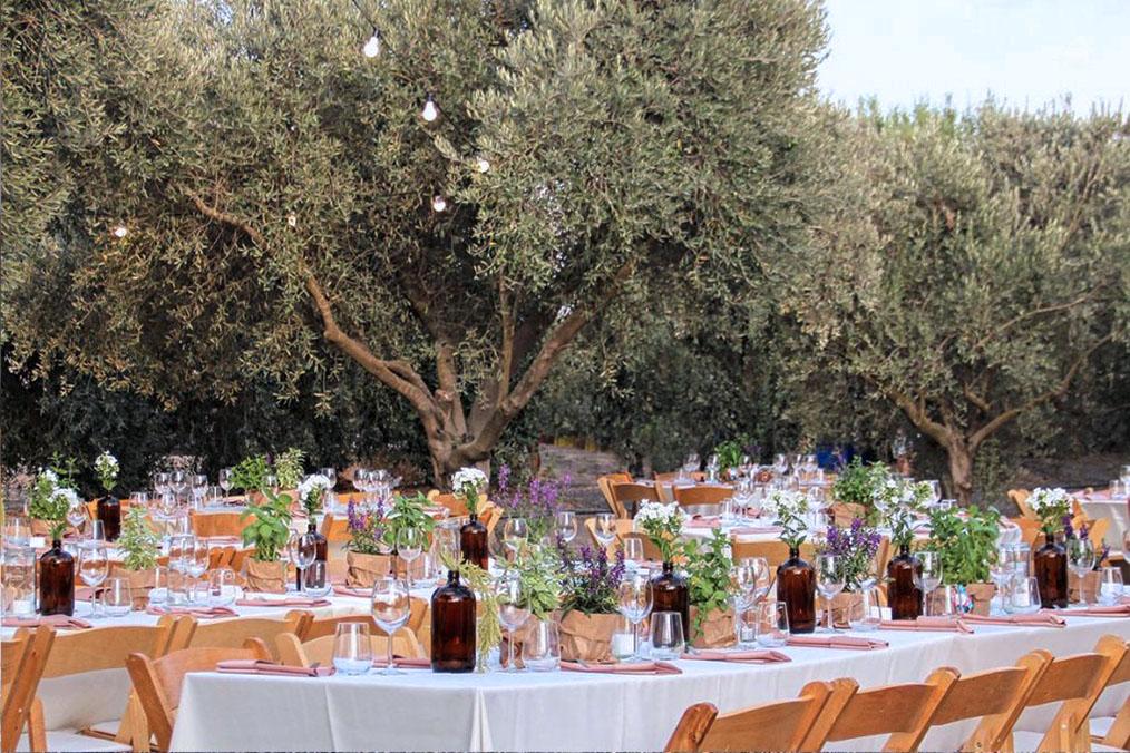 חתונה בלב מטע זיתים במרכז הארץ. מתוך החתונה של עדי וגל המקסימים